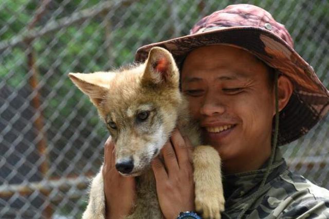 """北方森林动物园的13只小狼祝""""超级奶爸""""节日快乐"""