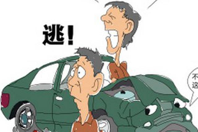 商务车撞死老人和两条大狗 司机逃逸后自首获缓刑