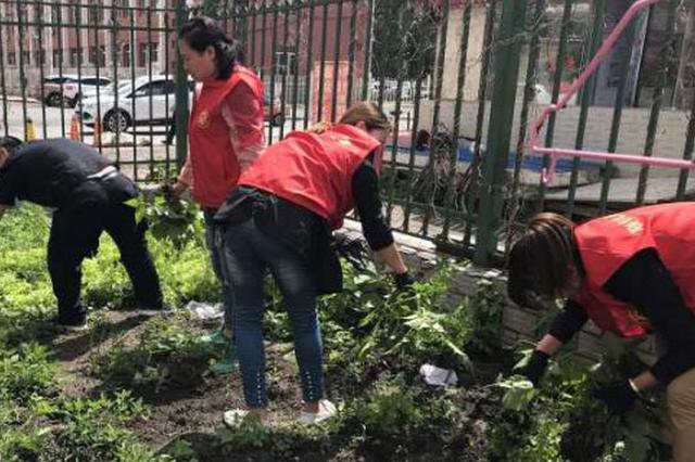 """公共绿地""""开荒""""种菜 3个私家小菜园被清理"""