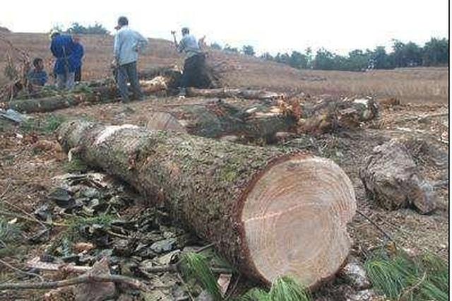 严厉打击毁林行为黑龙江14名干部因工作不力停止工作