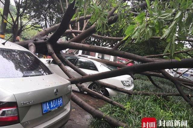 小区大树倒下砸到两辆车 保安:这些车属乱停乱放