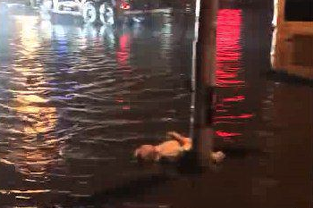 昨晚哈尔滨突降大雨 一名男子趟水触碰路灯杆身亡