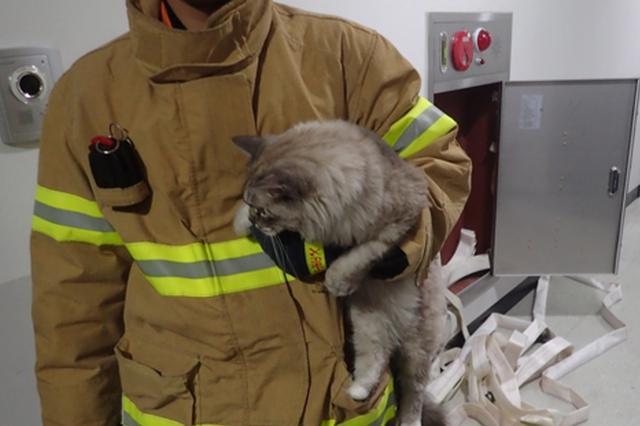 猫咪半夜开电磁炉点着厨房 被抓时惭愧低头(图)