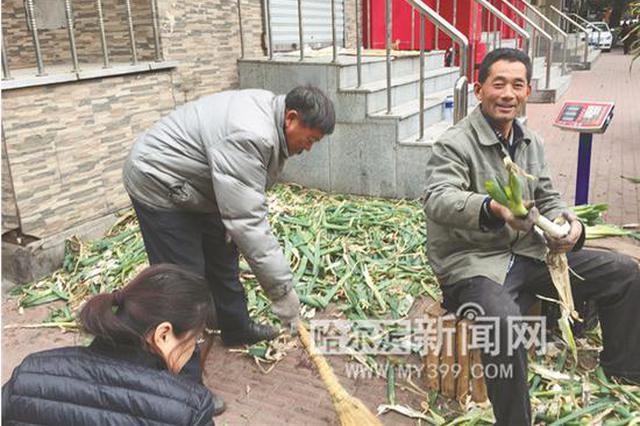 哈尔滨这座城像忙年一样忙储秋菜 已经变成一种情怀