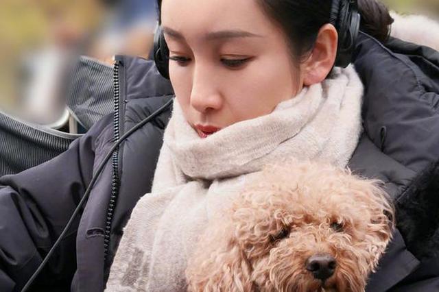 """秦海璐晒狗狗""""暖宝宝"""" 网友:这暖宝宝有点掉毛"""