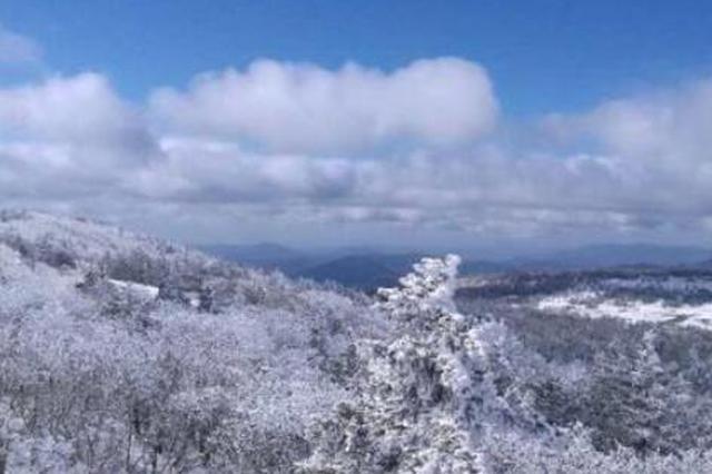 凤凰山雾凇雪松齐现 别急最美雪景在年底
