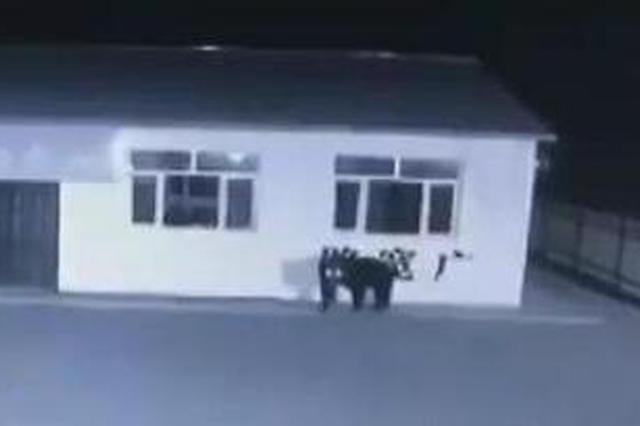 """400多斤大""""黑瞎子""""出现在抚远 竟走到了村委会窗下"""