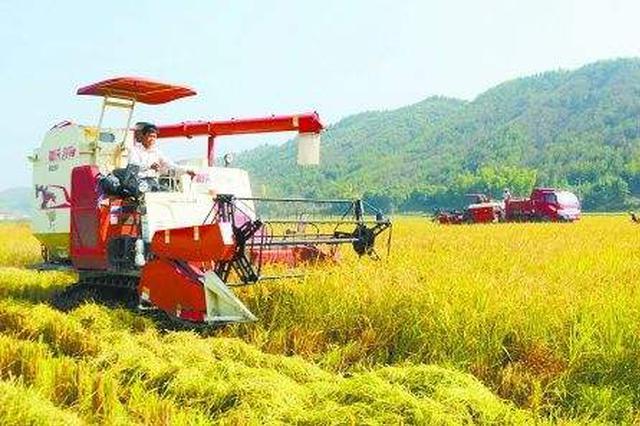 黑龙江省垦区2300余万亩水稻秋收工作全面告捷