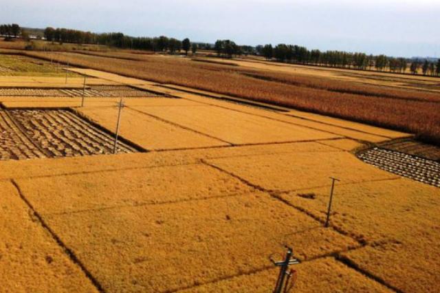 超7成粮食已收获 哈尔滨市水稻大豆收获接近尾声