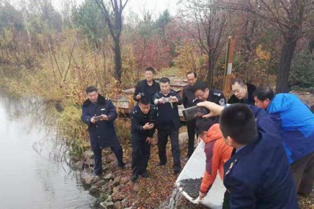 哈市林業局查獲近4萬只林蛙 放生到濕地公園