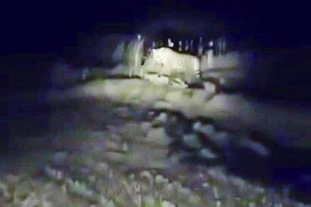 抚远再现东北虎踪迹 相距10余米村民驾车与老虎对峙