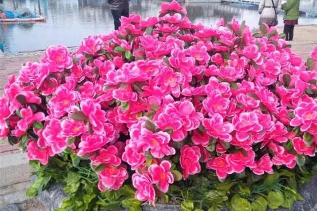 2万株薰衣草、一品红盛放 江沿儿姹紫嫣红入冬