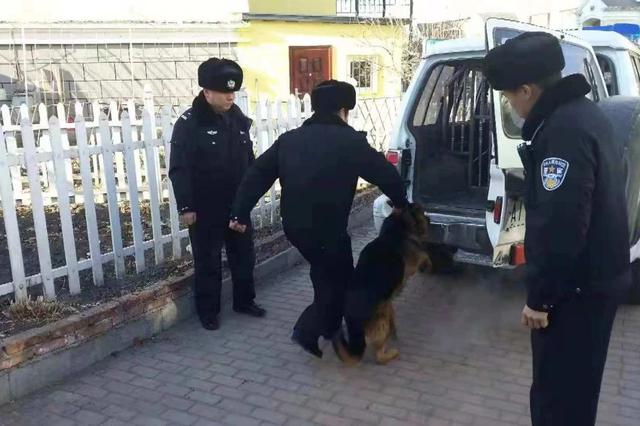 哈市采取管理整治结合方式规范养犬行为 严查违规遛狗