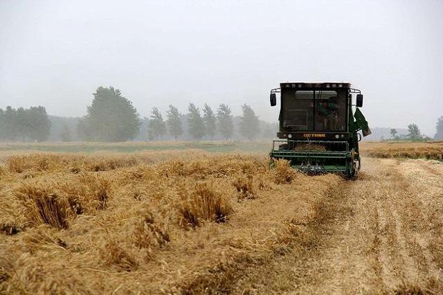 黑龙江鸭绿?#20248;?#22330;实现?#23853;?#20840;部还田 稻谷产量增产5%以上