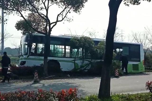 上海一公交车疑因避让车辆撞树 至少12人受伤
