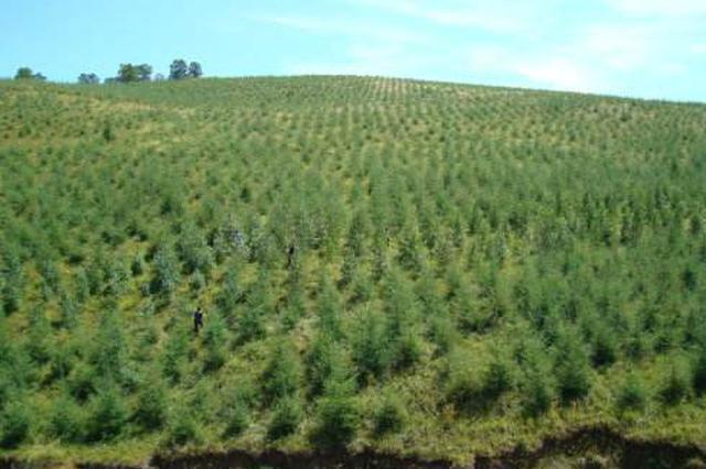 利用有利天气展开顶浆造林 今年全省计划造林117万亩