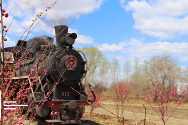 这也太美了吧!坐蒸汽小火车穿粉色榆叶梅林