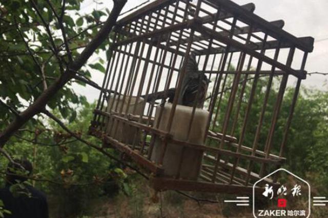 500只鸟被解救 再有人打鸟卖鸟可电话举报