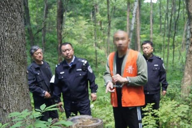 百余株国家二级重点保护植物被偷伐 最大根径44厘米