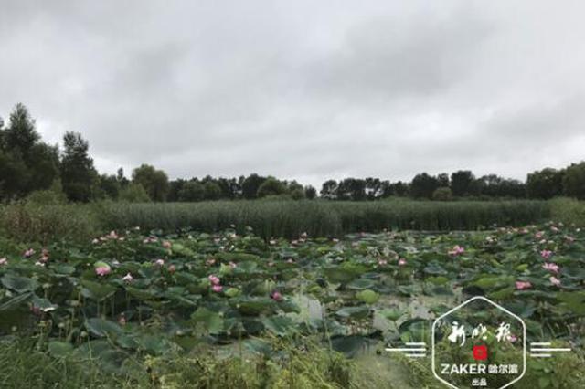 太阳岛湿地免费后游客如织 提醒:别惊扰折损野生动植物