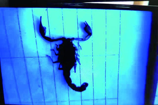 包裹里面爬出蝎子 哈尔滨一快递员被咬伤