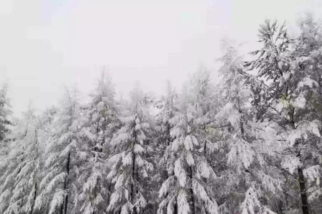 一秒入冬 大兴安岭九月飘雪 大波雪景图来袭
