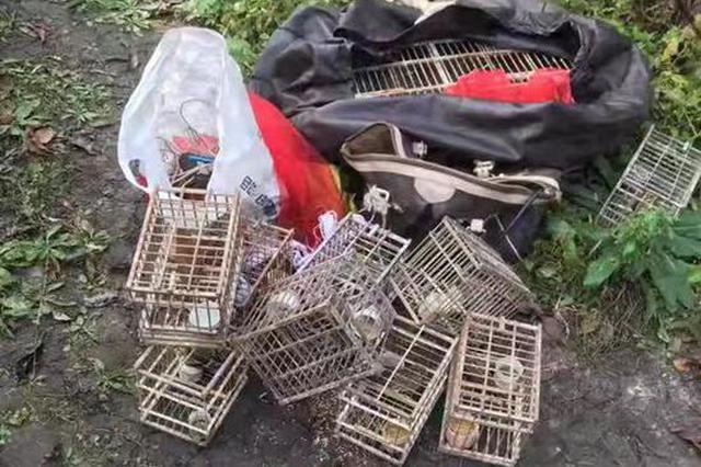 鸟儿南迁季 哈市警方查处一非法捕鸟点 解救小鸟50只