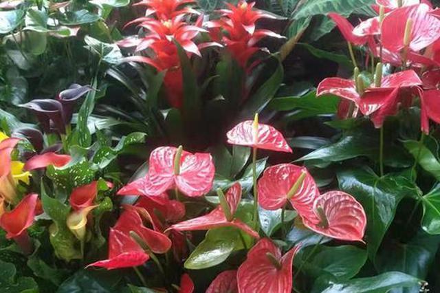花卉绿植换土换盆好时节 学会这几招儿 家里的花蹭蹭长