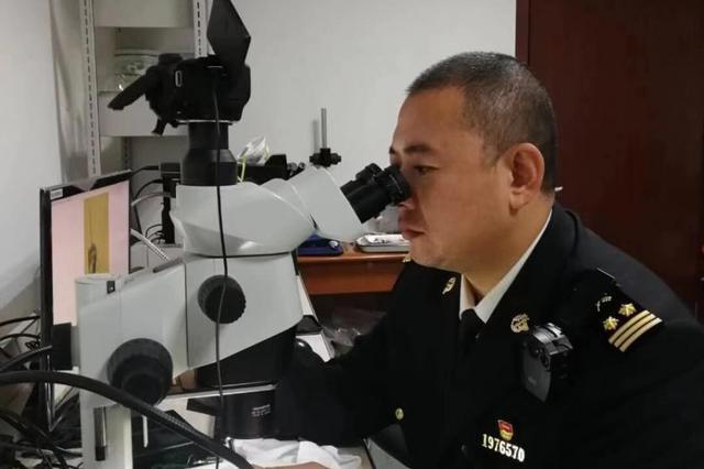哈尔滨海关截获东北首例番石榴果实蝇