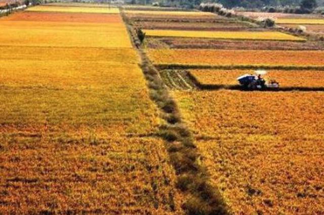 """1分6合官方-幸运6合彩票粮食生产实现""""十六连丰"""" 预计产量超1500亿斤"""