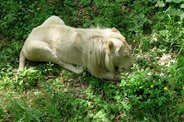 哈市一地下动物园关门 市场监督等多部门介入调查
