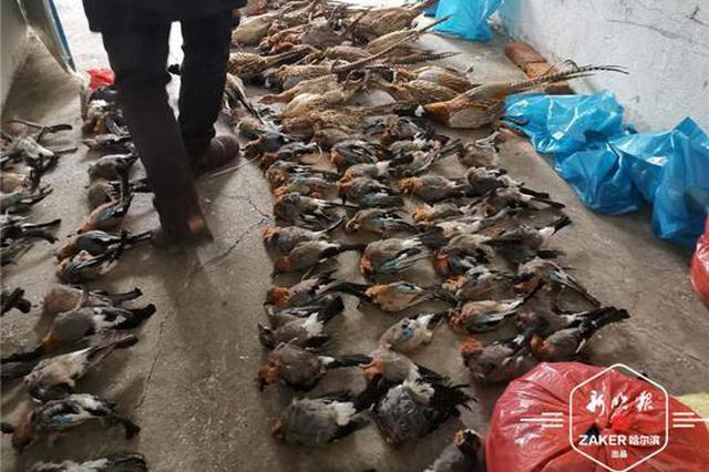挂鱼头卖野鸡!鱼贩私藏百只野鸡、松鸦被拘留