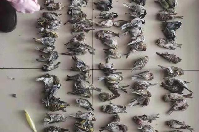 男子打鸟藏冰箱里104只死体 想攒到过年时吃