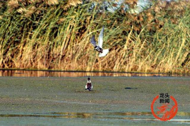 黑龙江省再添11处国家湿地公园 总数增至78处