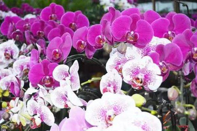 初一至初五哈尔滨花卉大市场暂停服务 初六开始营业