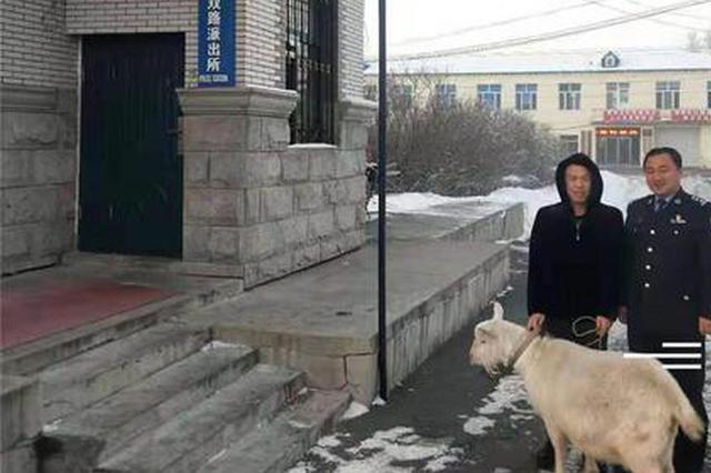 男子撬开院门偷出一只羊 想卖到火锅店时发现羊怀孕了