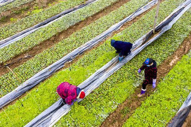 黑龍江省已籌措春耕資金超七成 種子落實近八成