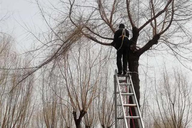 """大樹""""理發""""啦 哈爾濱市道外區各公園啟動""""春整"""""""