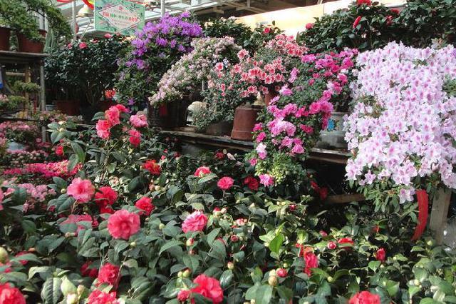 花卉大市场27日试营业 需佩戴口罩、测温、扫码后进入