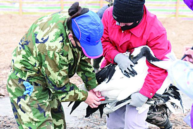 明起哈尔滨北方森林动物园恢复开放 每日核定客流5千人