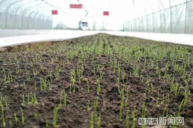 哈市积极推进涉农企业复工复产 全市备春耕生产进展良好