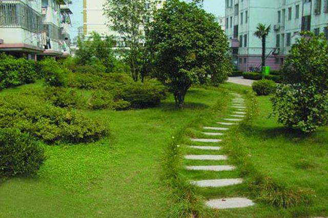 今年黑龙江省计划造林绿化100万亩