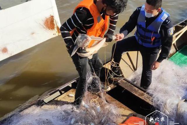 """渔民在黑龙江里误捕""""活化石""""达氏鳇和史氏鲟 民警协助放生"""