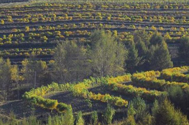 黑龙江省圆满完成百万亩造林绿化任务