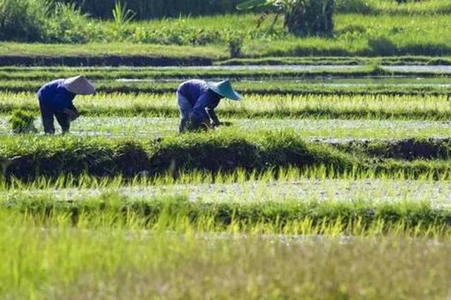 长势喜人 黑龙江省粮食生产取得历史同期最好苗情