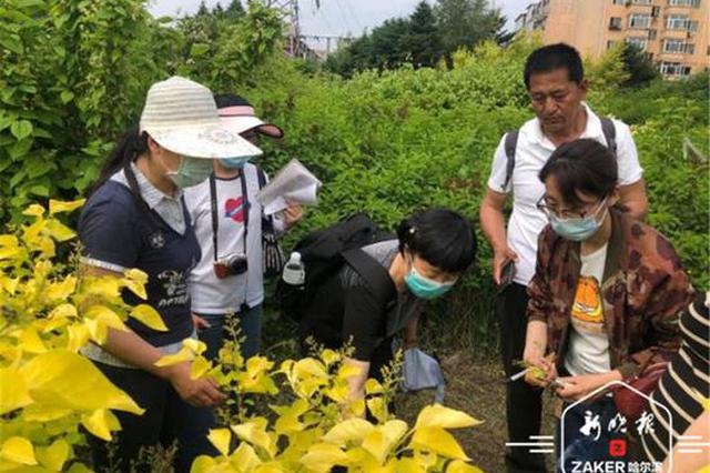 省森林植物园成功选育5种彩叶丁香新品种填补世界空白