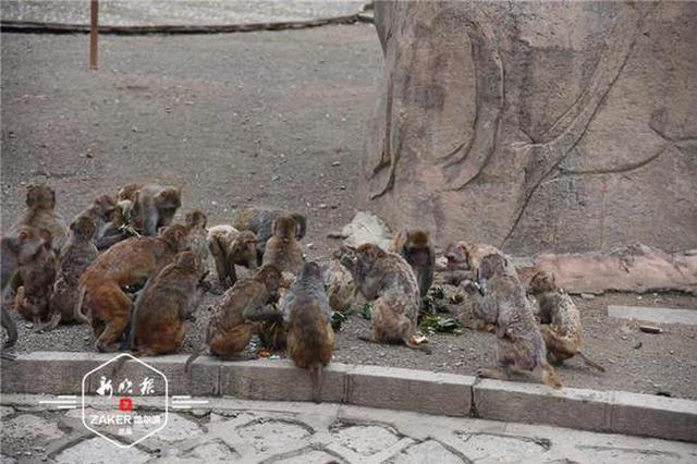 """可甜可咸 端午节动物园的""""小可爱""""开启粽子美食之旅"""