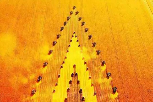 """""""北大荒""""调整农业结构 粮食作物再增20万亩"""