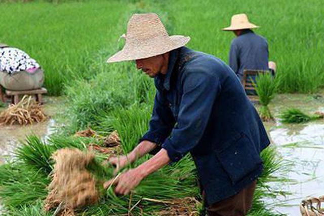 """给""""挂锄期""""农民找活儿 黑龙江省启动转移就业专项行"""