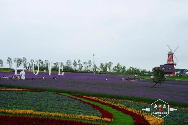 薰衣草庄园4日开园 不仅可赏花看景 还能垂钓、BBQ
